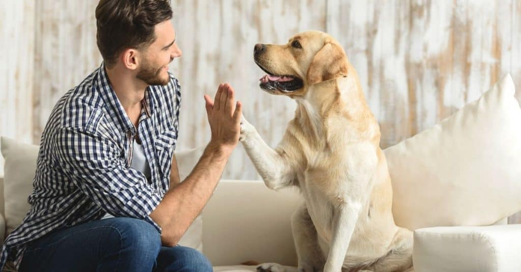 A man high fiving his dog.