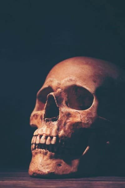 a skull lit with orange light with a black background