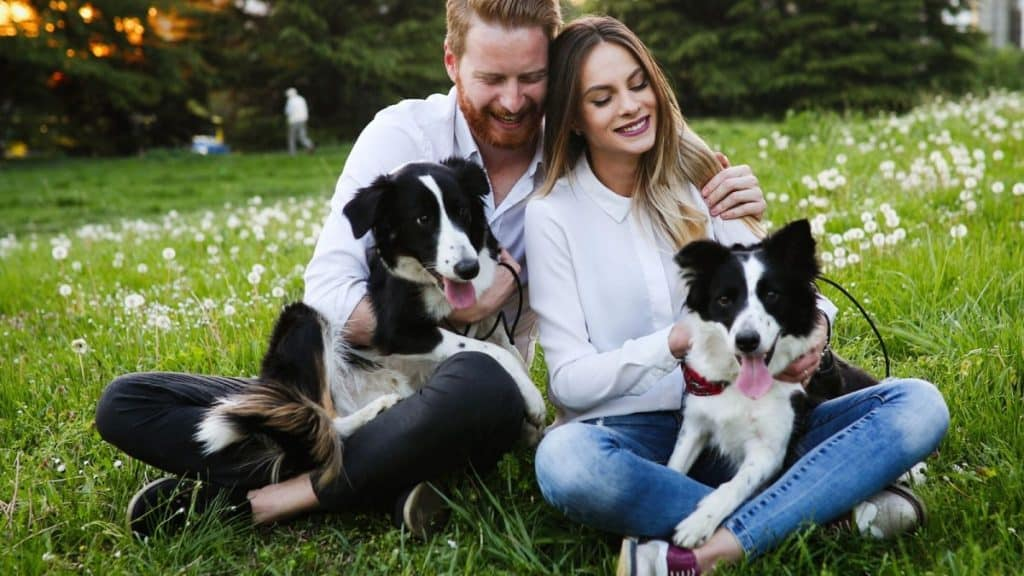Couple sitting on the grass with their two border collies.