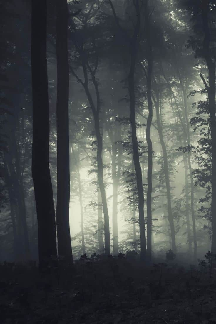 Haunted woods like in the Blair Witch Project.