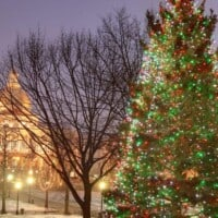 Image of Boston's official Christmas tree.